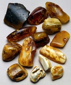 Baltic amber