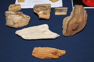 Courtland's specimens 1